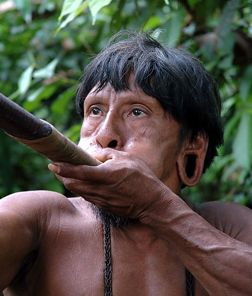 Indigenous Amazonian Using Blowpipe and Poisoned Arrow to Hunt